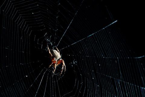 Spider_DPR