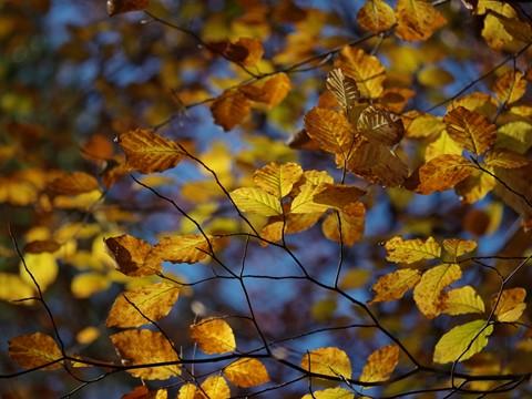 Autumn-2013-10