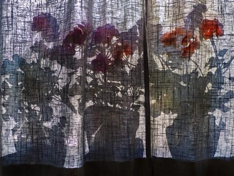 Flowers behind curtain