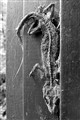 Crunchy Dead Gecko