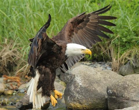 eaglesAday 015