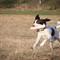 Gus at Dog Park-FDH-April 22, 2014-0009