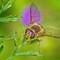 Garden_macros_07a_2021_030