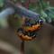 IMGP02252222mating ladybug