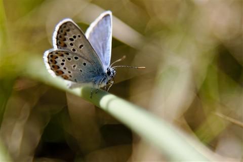Butterfly-v02_1