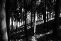 Forest slope