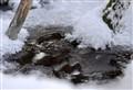 Resisting Winter's Icy Grip