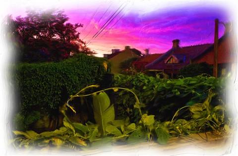 Sunset-backyard