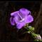 P1630901 56%cr field flower2