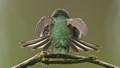 Anna Hummingbird Fanning