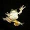 treefrog 2