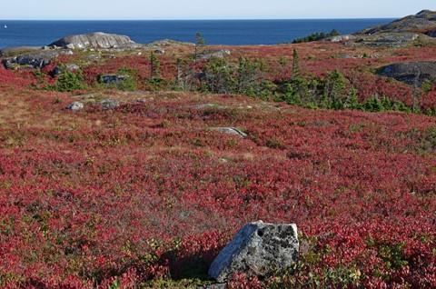 Coastal Barrens in October