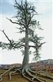 78  Bryce Canyon
