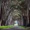 cypress-tree-tunnel--point-reyes