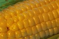 Fresh Corn Yellow