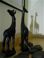 Giraffe shadows