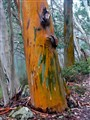 Coloured bark