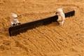 Combing the desert