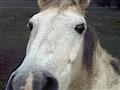 Jam048 Friendly Horse