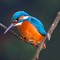 KingFisher in Rome - Italy
