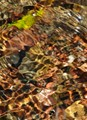 Soft patterns created by sunlight through  the waters of a small brook  illuminating the bottom.