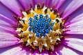 Macroflower