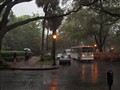 Savannah in the rain