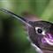 Hummingbird_Mar 2011_Roll 01_Frame  20_Fuji Provia 100_2048W