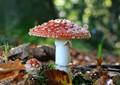 Fly - fungus