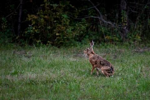 rabbit (100 of 1)-5