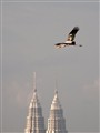 Painted over KLCC