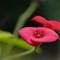 smallflower-closeup