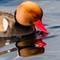 dobble duck