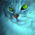 Oskar's Eye