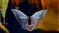 """Bat in """"Creatures of the Night"""" Zoo Exhibit"""