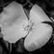 wild flower (1 of 1)