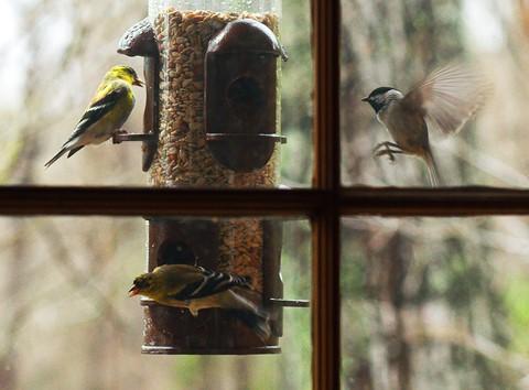 birds--DSC_0506_edit