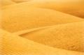 Desert Lines I