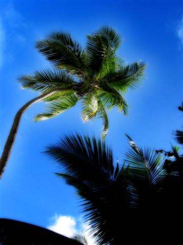 palm glow