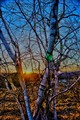Sunset Through the Network