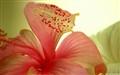 Petals & Stigma
