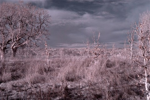 DSD_8910 Infrared processed