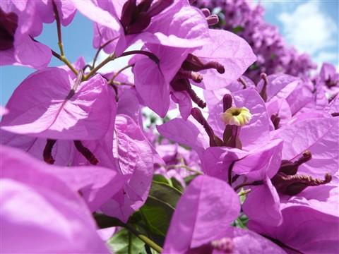 lil yellow on purple