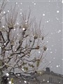 Snow Crisis
