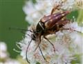 Beetlemania.