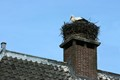 The Stork on the Roof, Wijk bij Duurstede, Holland