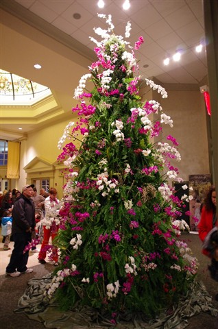 DSBG Orchid Tree