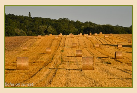 Bales on sunset
