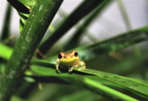 posthurricanefrog2