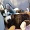 Pomsky puppy playing: